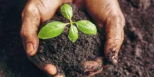 Važnost dobrog sjemena